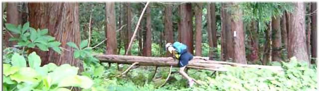 cropped-140623natagiri.jpg