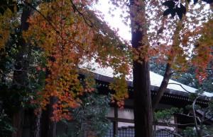 141205sanpo-koyo