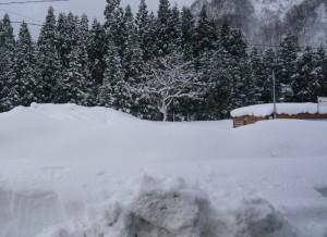 141223yuzawa-snow1