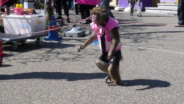 太郎次郎のお猿さん
