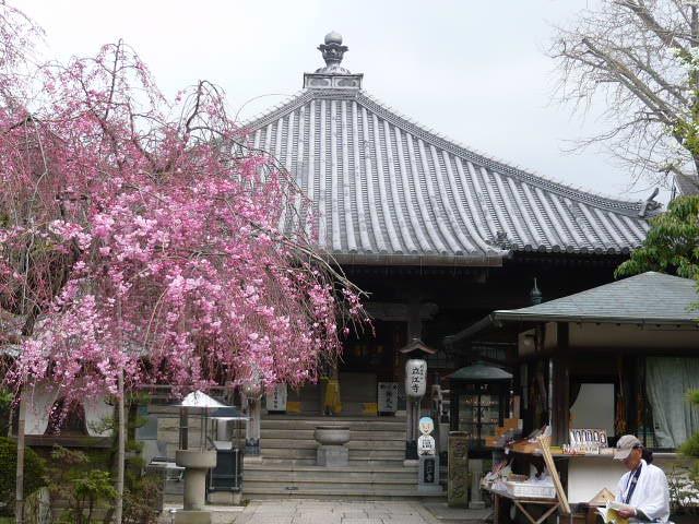 19番立江寺 しだれ桜