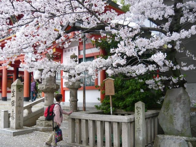 神戸三宮・生田神社の桜 4月3日
